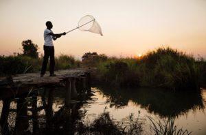 ihi_mosquito-swarm-hunting